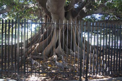 094 Boom in parkje bij cementerio de la recoletta