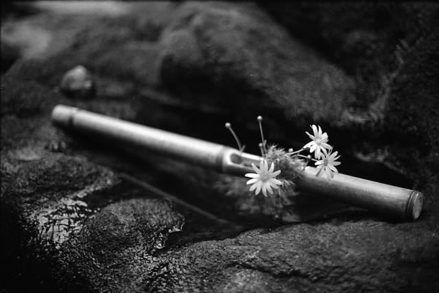 生け花 - Flower arrangement