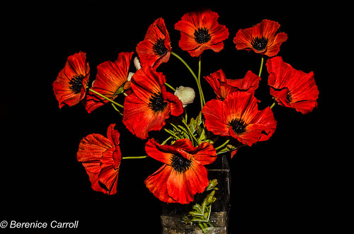 Artificial Poppies.