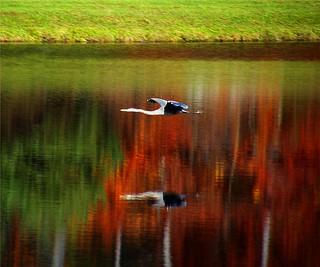 Flying Reflection