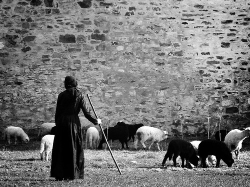 SHEPHERD OF THE MONASTERY