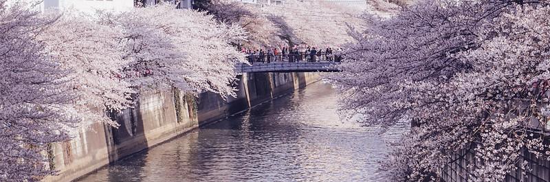 Meguro River, Tokyo