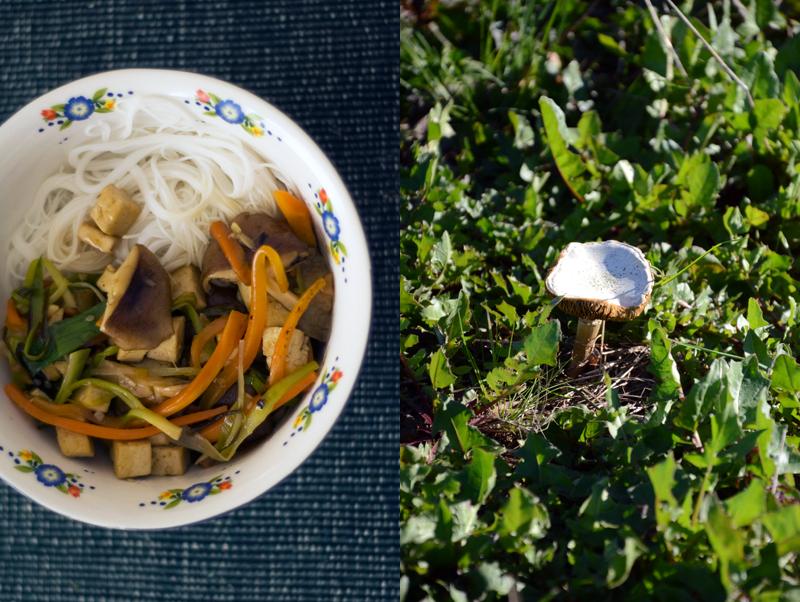 Cogumelos e tofu, chinese style
