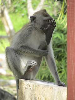 """Monkey""""></a></span><span style="""
