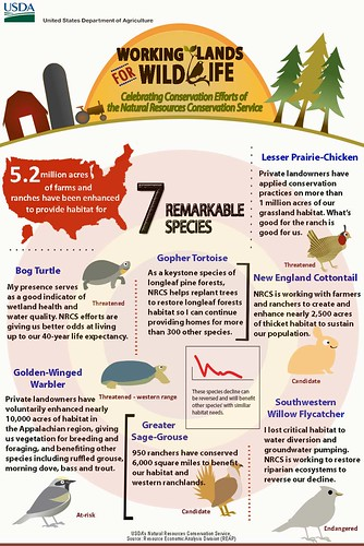Meet seven at-risk species that benefit from habitat restoration and enhancement through NRCS' Working Lands for Wildlife partnership. Infographic by Jocelyn Benjamin. Click to enlarge.