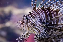 Ripley's Aquarium of Canada - Dec 31/14