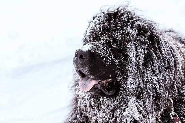 Abominable Snow Dog!