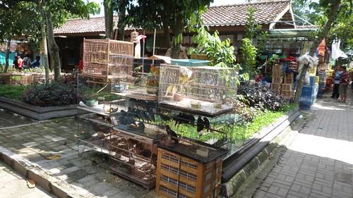 Yogyakarta-4-064