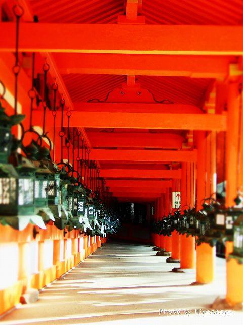 釣燈籠と神社の「朱」がよく合います。