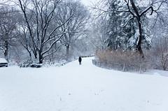 the bridle path, central park