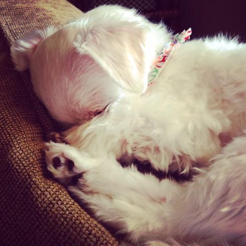 Resting pups