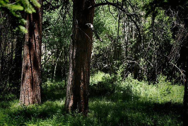 2016 6 26 - Wild Basin Forest - CB - DMTD - 9S3A0139