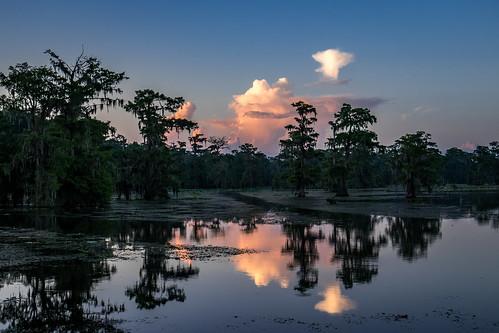 lakemartin louisiana bluehour swamp cypressswamp sunrise fujifilmxt1