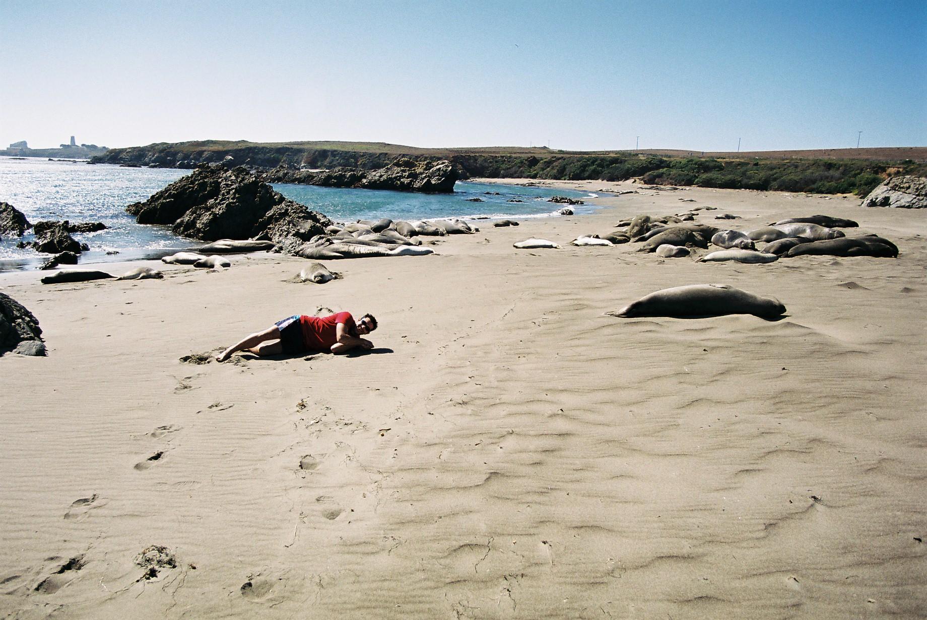 Yo entre Focas y Leones Marinos en las playas de la Costa Californiana recorriendo la costa de california por el big sur - 9039963909 e189c4899b o - Recorriendo la costa de California por el Big Sur