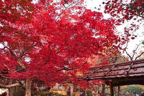 【写真】2012 紅葉 : 厭離庵/2020-10-15/IMGP7839