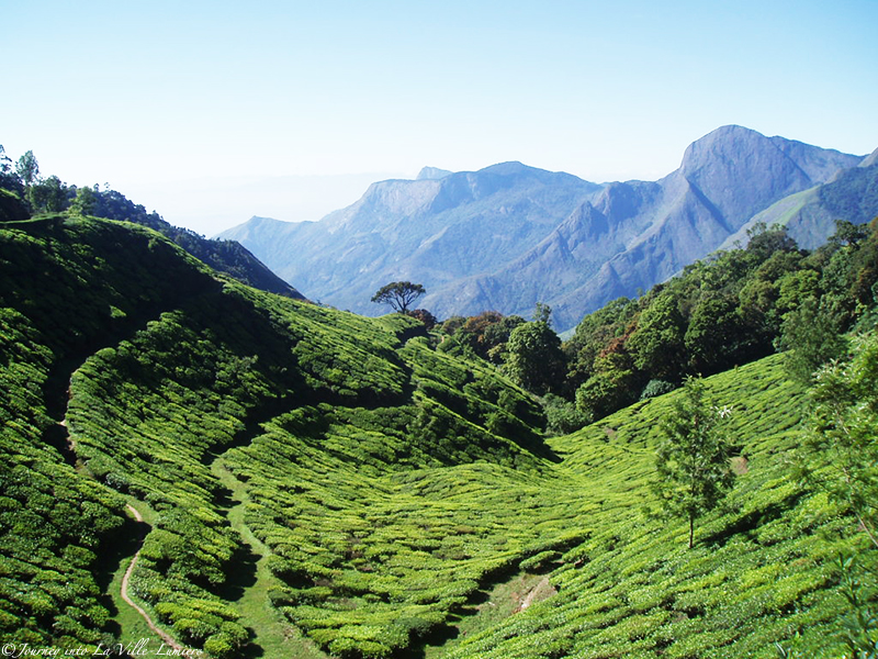 Munnar in India - Kerala
