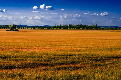 blue summer sky cloud brown sun white field landscape evening view prague wheat grain hills czechrepublic čakovice českéstředohoří