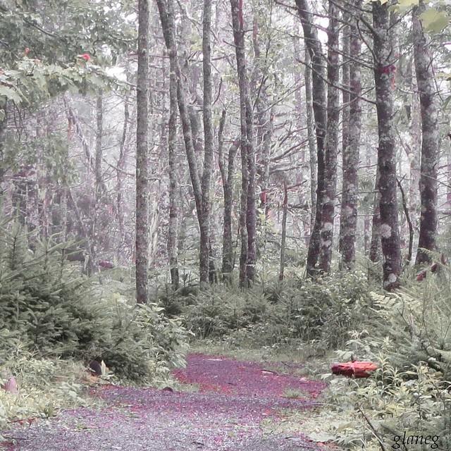Woods in Fog, Canon POWERSHOT N