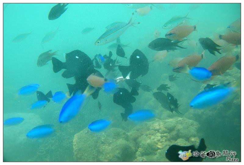 2013歐船長東海休閒漁業_95