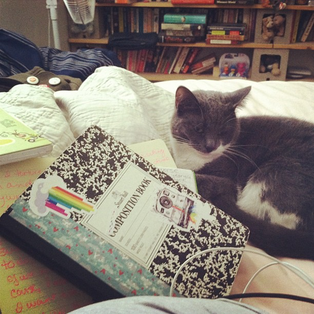 Day 3 - 1000am writing and a kitten. I need more rainbow stickers for my everyday notebook. #iggppc30d2 #10am #kitten #writing #writeinbed
