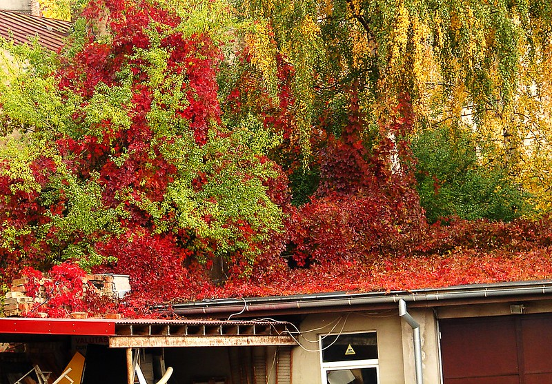 Beautiful contrasts of autumn colours by aigarsbruvelis