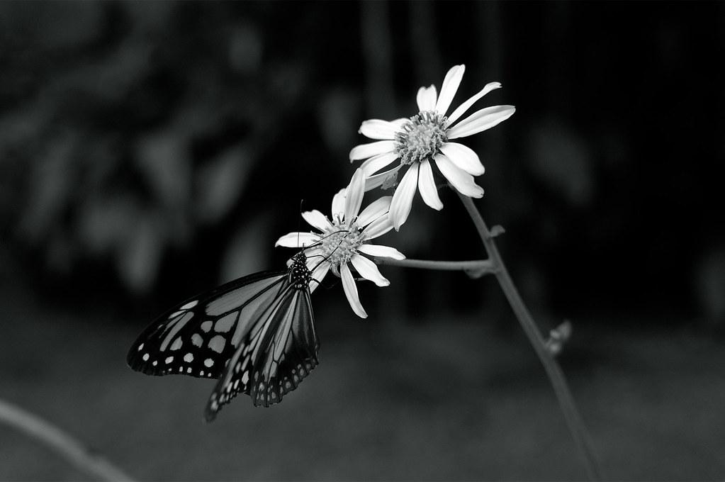 Butterfly|臥龍山荘