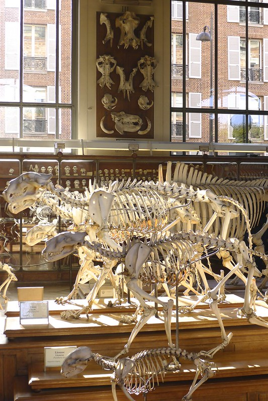 The gallery of Palaeontology and Comparative Anatomy at the National Museum of Natural History, Paris