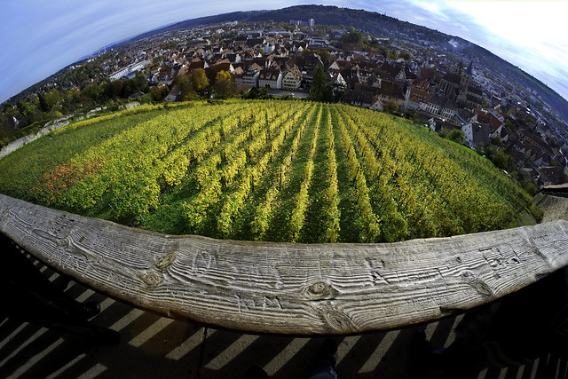 A Fish's View of Esslingen