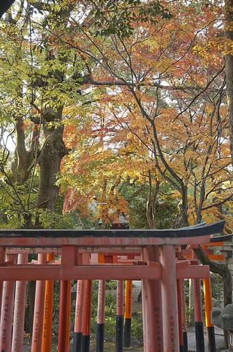 【写真】2013 紅葉 : 上御霊神社/2020-07-01/IMGP4181