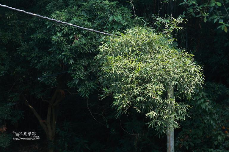 台南私藏景點--澄山教會 (14)