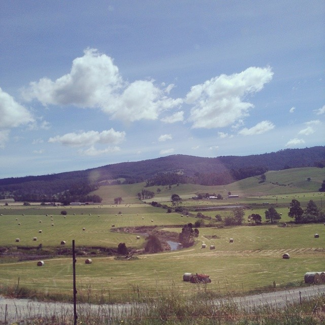 Taking @crimpity & @kaskathepooh for a drive through the Lilydale countryside #tasmania