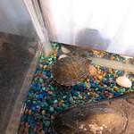 Xmas turtle (dinner next year?)