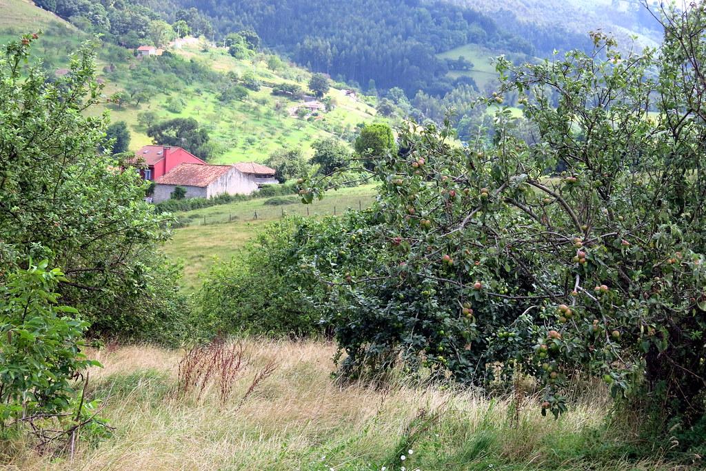 paisaje con manzanos