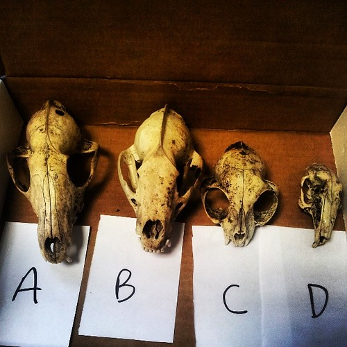 #skull ID test