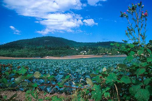 John Dean Park, Mount Newton, Saanich Peninsula, Victoria, Vancouver Island, British Columbia, Canada