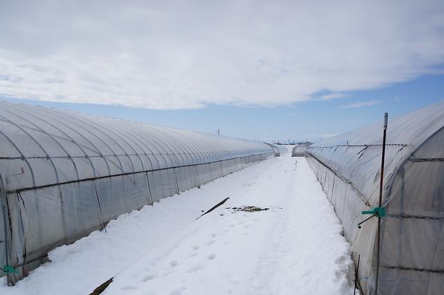 雪の中のビニールハウス