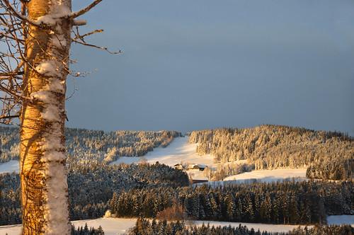 schnee snow ski sunrise austria lift farm country wiese wald sonnenaufgang bauernhof steiermark baumstamm schilift wenigzell schneeland