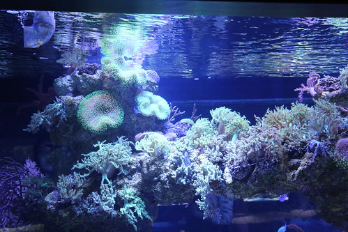 sumida_aquarium6