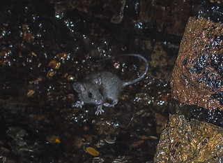 Brisbane Urbex Rat