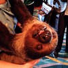 Sloth! I met a sloth!