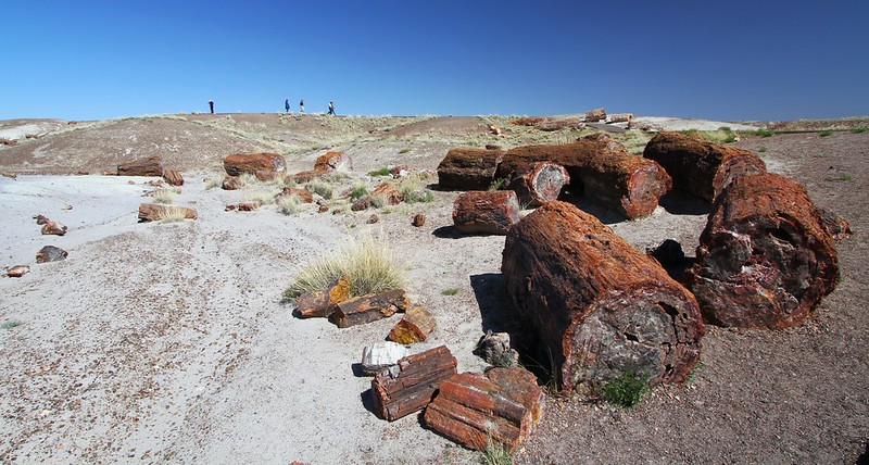 IMG_4067 Crystal Forest,  Petrified Forest National Park, Arizona