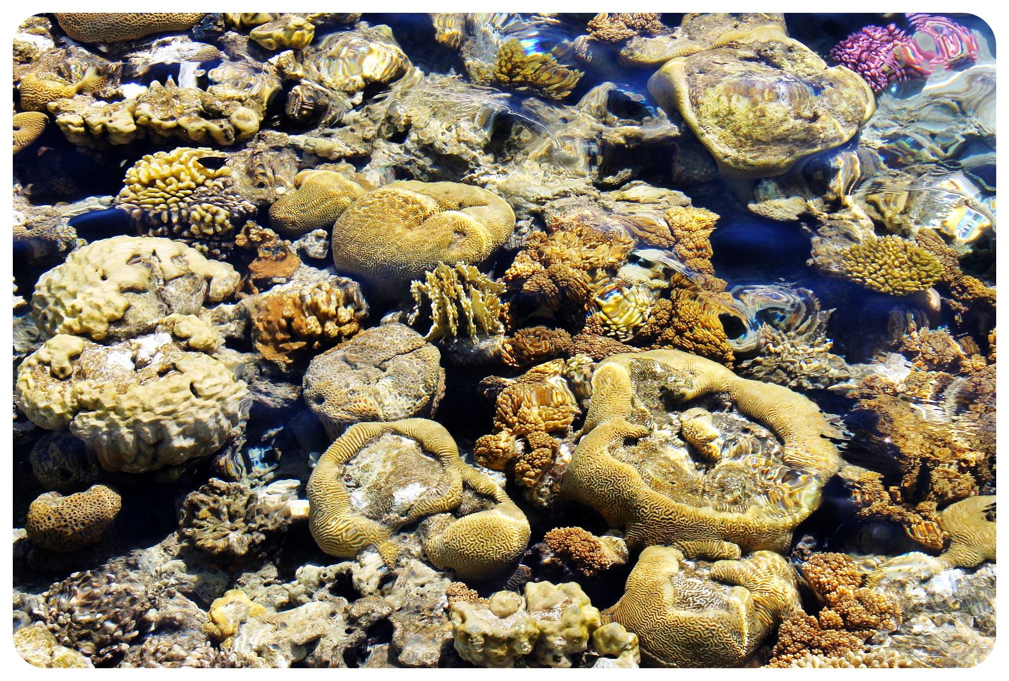coral eilat israel
