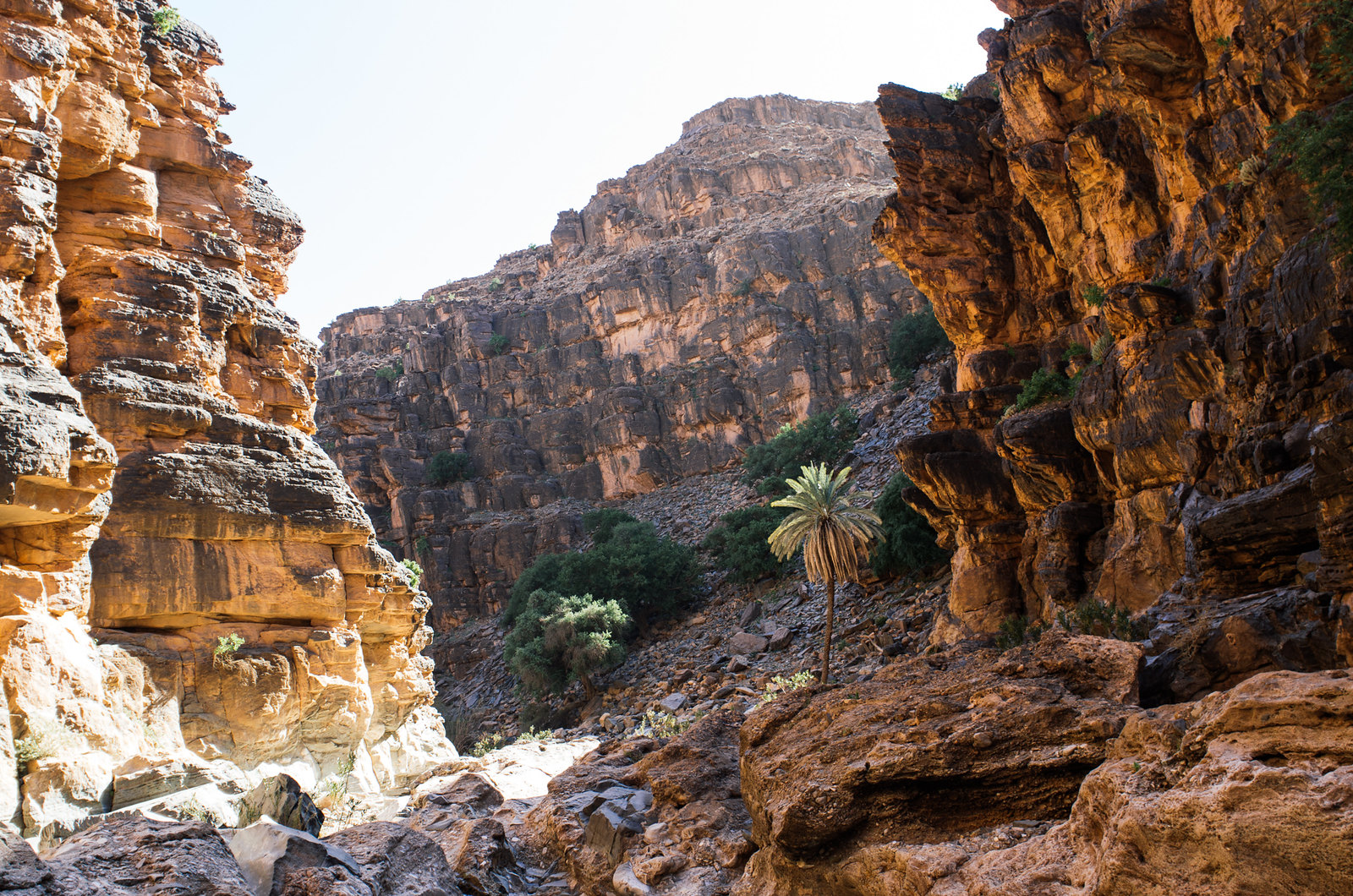 Amtoudi, anti-Atlas - 5 jours de trek au Maroc - Dernier palmier pour la route
