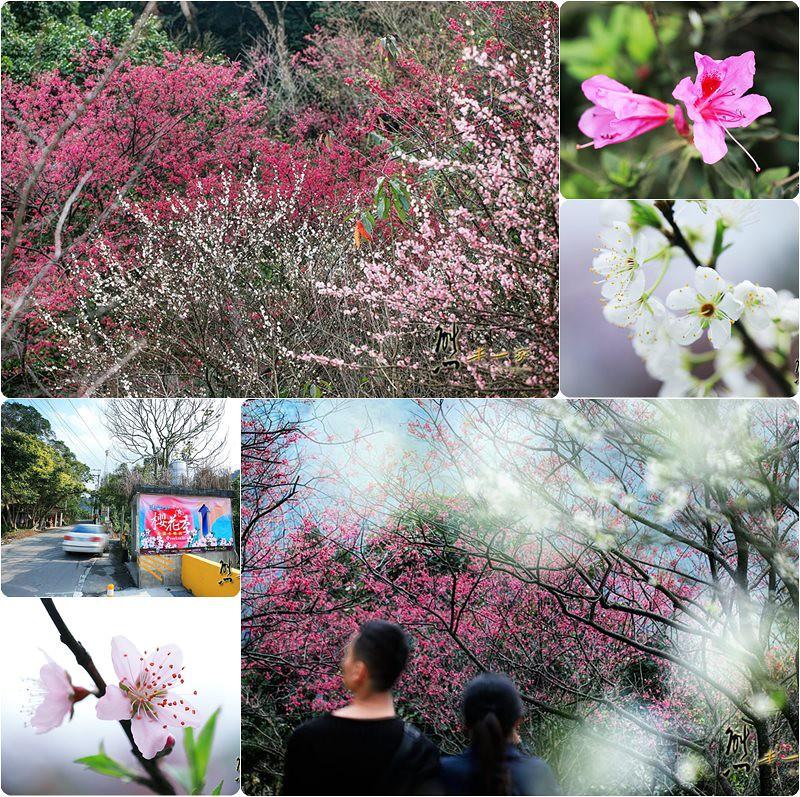 建安131櫻花園