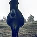 Donkey by Nicolene1989