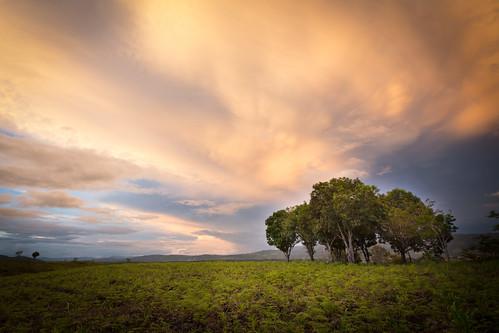 trees sky peru evening stormy mango sanmartin rainyseason moyobamba nuevacajamarca