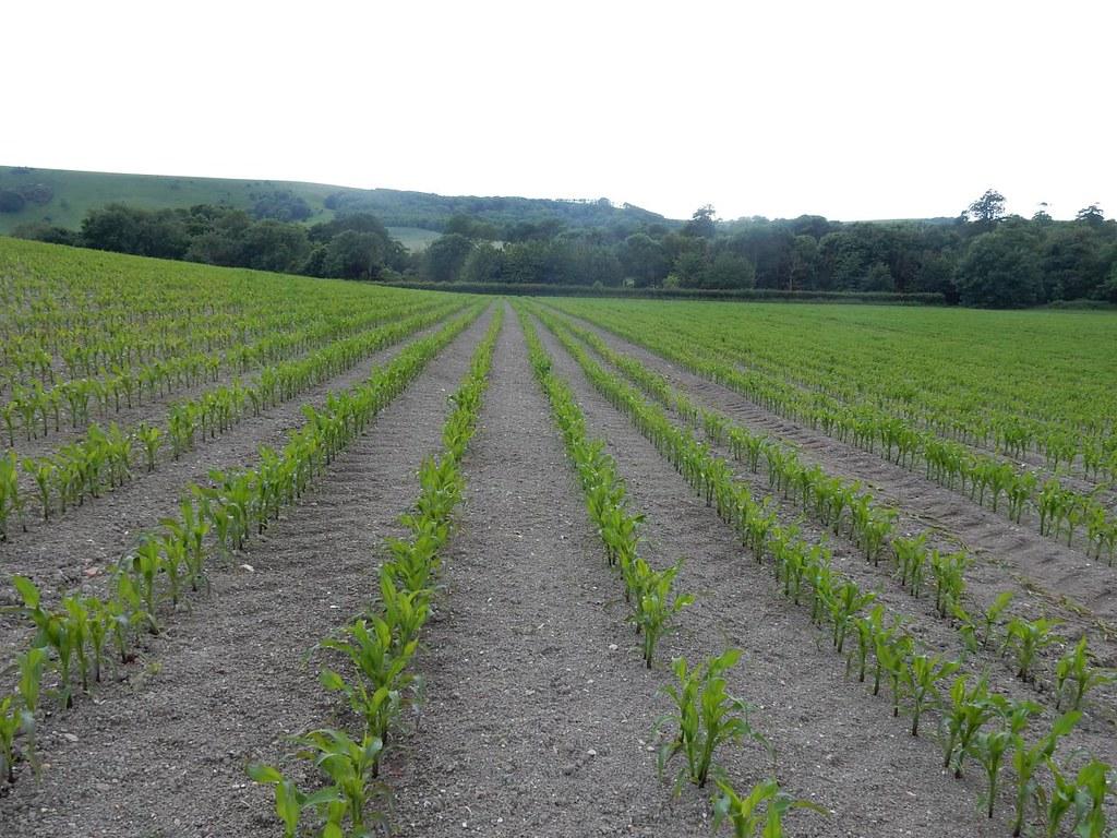 Field near Firle Lewes to Berwick