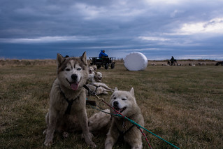 Hólmasel Dog Sledding Team
