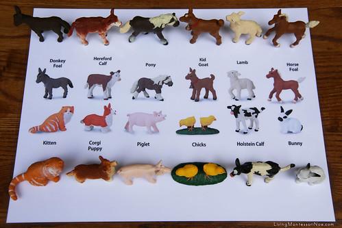 Farm Animal Matching Layout Using Safari Ltd TOOB Key