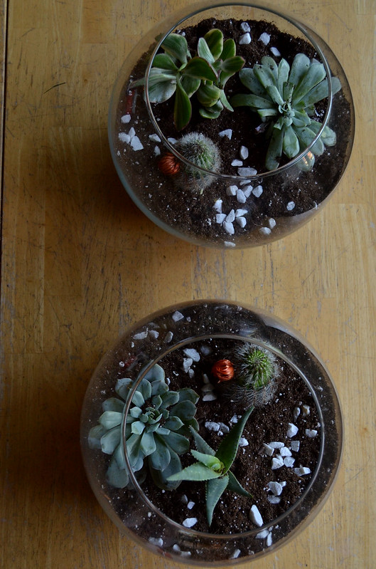 DIY Glass Terrarium 12